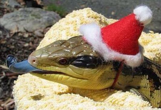 Snake in a santa hat