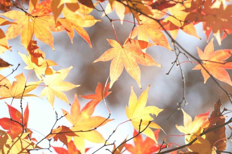 府中の森公園紅葉