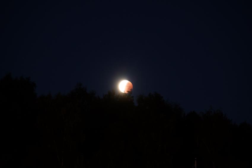 Der Schatten verschwindet wieder... der Mond auch, nämlich hinter den Baumwipfeln.