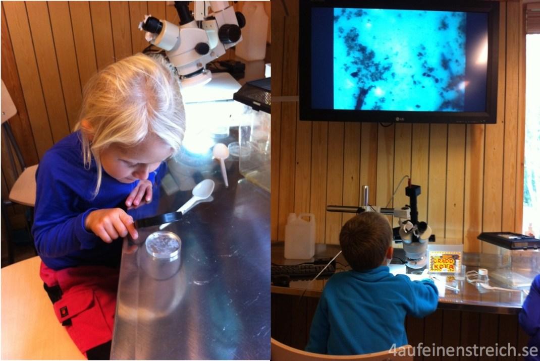 ... und danach im Labor untersucht!