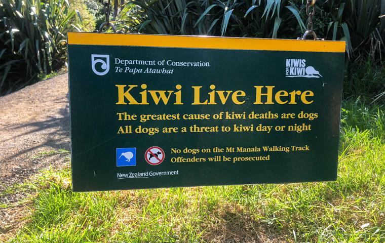 58 Grad Nord - Familienauszeit Neuseeland - Whangarei Heads - Mount Manaia - Kiwi Live Here