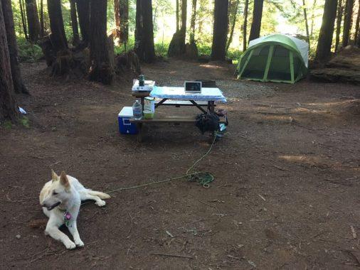 Redwood Campsite no stress!