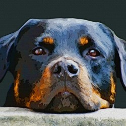 Financially Independent and Miserable Rotweiler