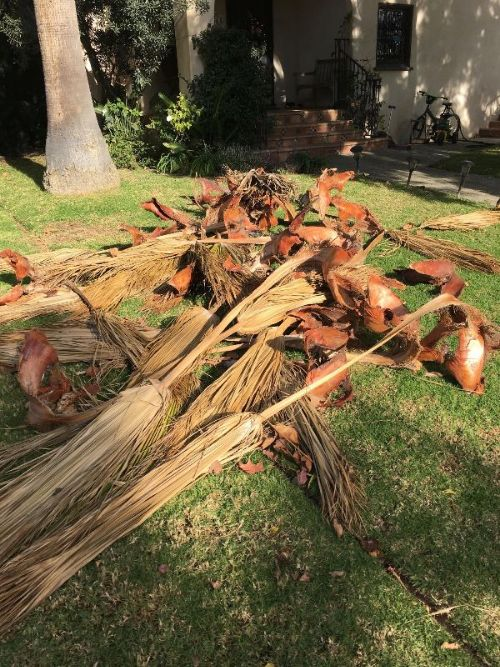 Tidy up palm fronds
