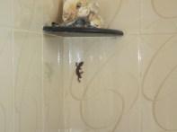 Lizard in the bathroom!!