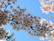 Hoa và trời