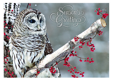 HP13311 - N3311 Winter Owl Holiday Card