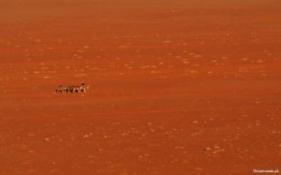 Wadi Rum - pełnia pustyni - Piąty Kierunek06