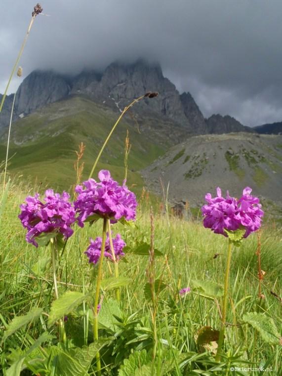 Chaukhi - gruzińskie Dolomity - Piąty Kierunek06