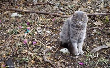 Cypryjskie koty - Piąty Kierunek02