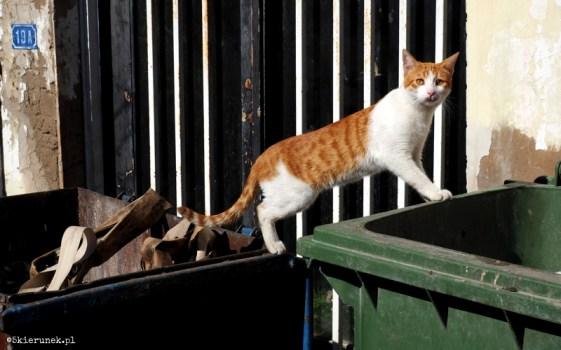Cypryjskie koty - Piąty Kierunek09