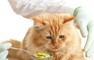 vitaminai katėms