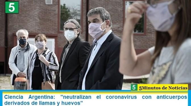 """Ciencia Argentina: """"neutralizan el coronavirus con anticuerpos derivados de llamas y huevos"""""""