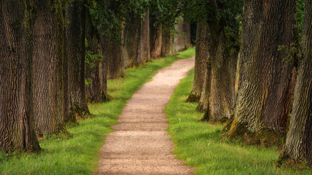 pathway-in-between-trees-1136458