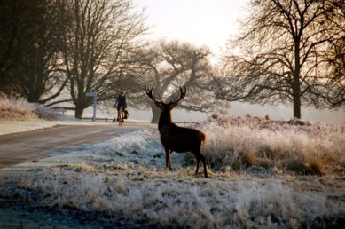 Beautiful Richmond Park