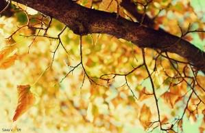 """Herbst Autumn Blätter bunt Laub  Foto: Insomnia, CC BY  Copy & Paste Code für Bildnachweis:  Bildnachweis: Aufmacher """"Autumn's Whisper"""" von Insomnia, CC BY ND - 5VIER"""