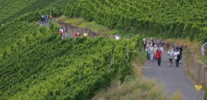 Ein tolles Erlebnis - wandern in den Weinbergen! Foto: Moselwein e.V. - 5VIER