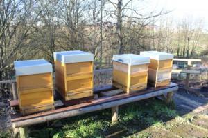 Bee.Ed_1