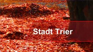 Bäume_Stadt - 5VIER