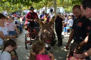 Viezfest Esel_Copyright Hanspitt Weiler - 5VIER