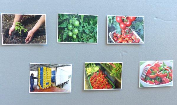 Errate mit Bildern den Produktionsweg, Foto: Marie Baum