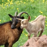Family Friday: Tiere im Naturpark Hunsrück-Hochwald