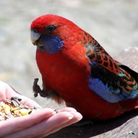feeding-the-bird-1406407-1280x960 - 5VIER