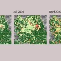 Wissenschaftler leisten Beitrag zu nachhaltiger Forstwirtschaft