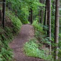 """Weitere barrierefreie Wanderroute in Bitburg im Mötscher Wald """"Alert"""""""