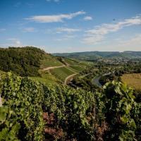 Die sommerliche Weinlandschaft am unteren Saartal bei Wiltingen. Bildquelle: Timo Volz/Moselwein e.V.