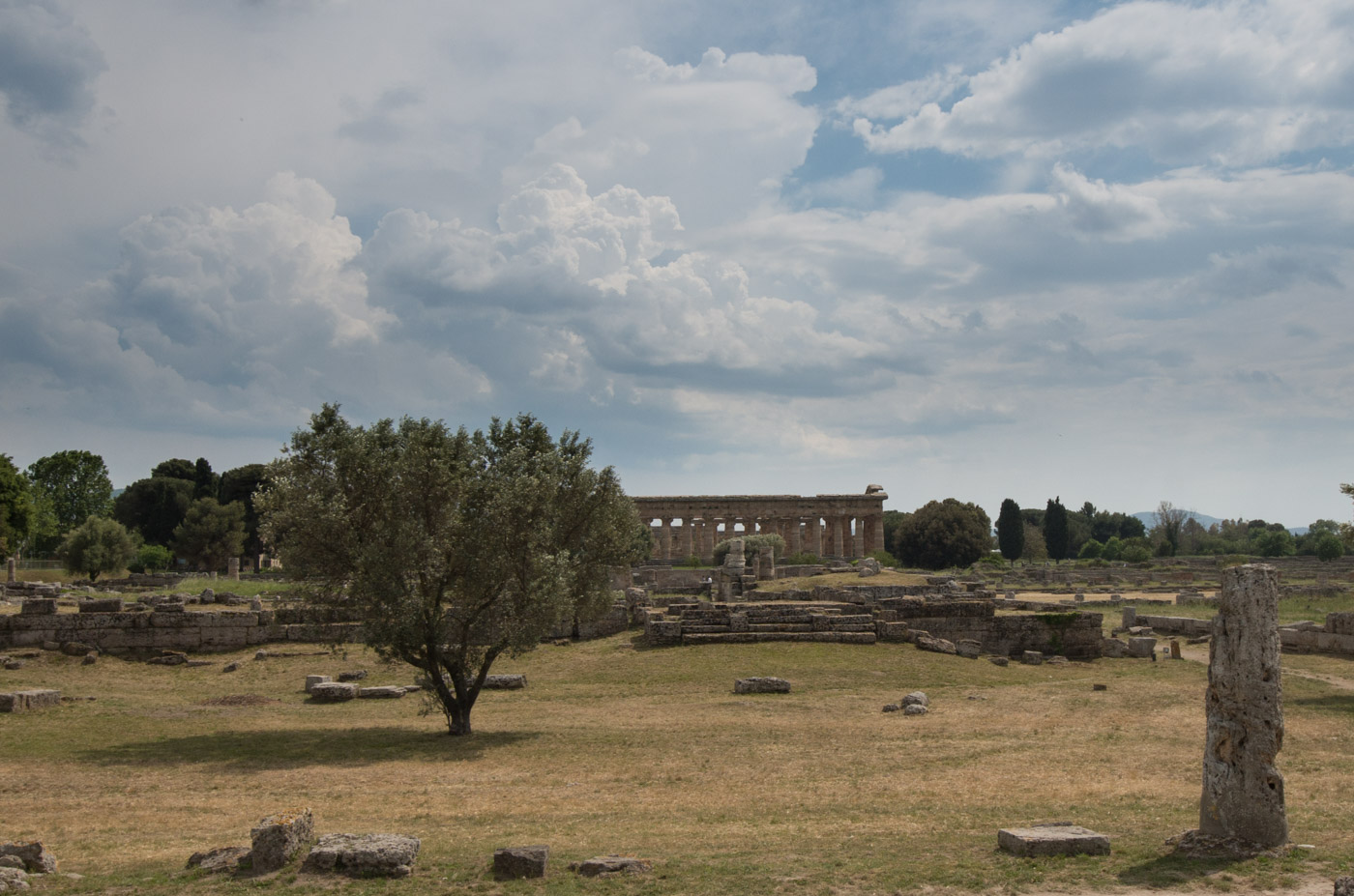 The archeological site at Paestum is a beautiful and tranquil park on top of everything else.
