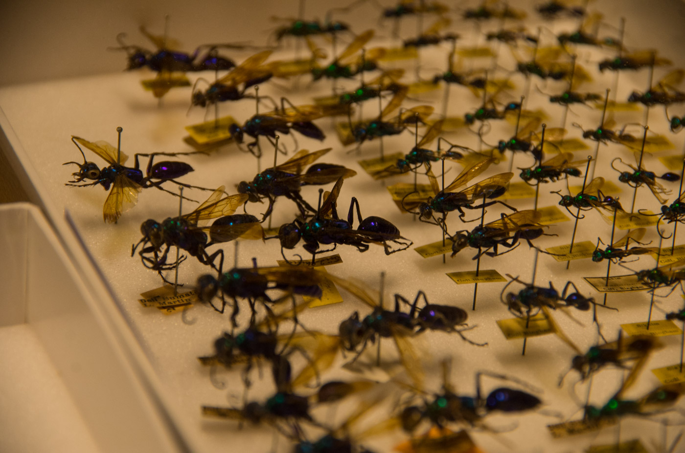 New video: Inside Berlin's Museum for Natural History