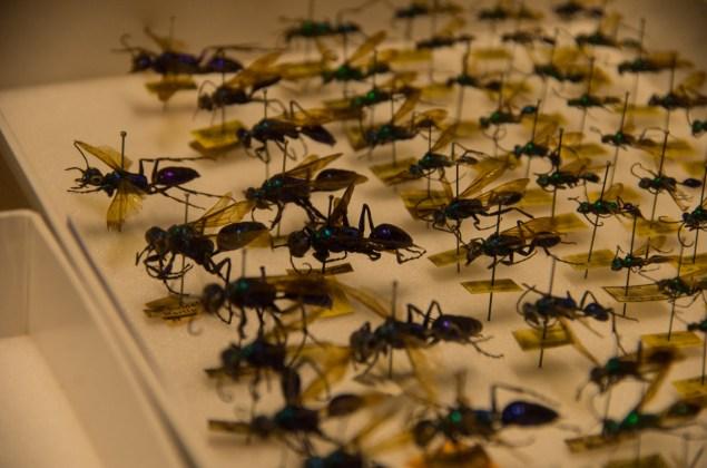 museum-fuer-naturkunde-berlin-7839