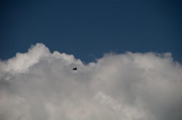 sky, himmel, wolken, vogel
