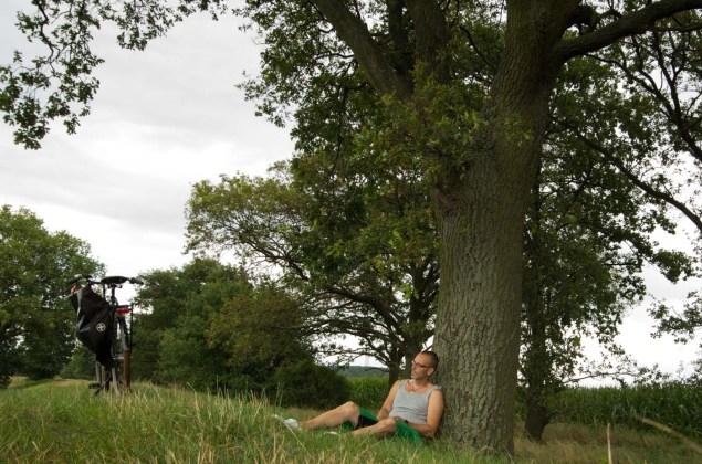 tree, bike, relaxing, man