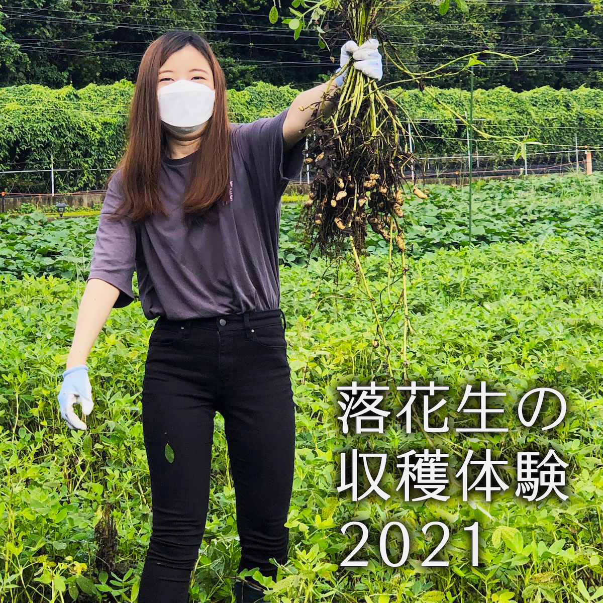 You are currently viewing 落花生の収穫体験 2021