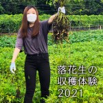 Read more about the article 落花生の収穫体験 2021