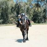 Friesian Horse Tumblr Posts Tumbral Com