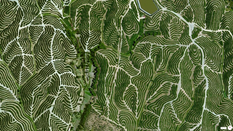 Vineyards Huelva, Spain 37°42′12″N 6°36′10″W