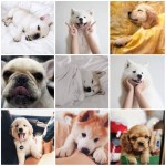 Puppy Aesthetic Explore Tumblr Posts And Blogs Tumgir