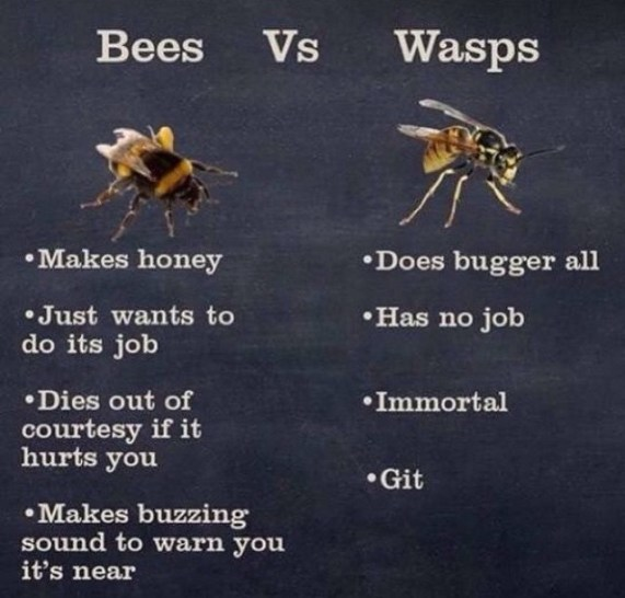 Image result for good wasp is a dead one gif