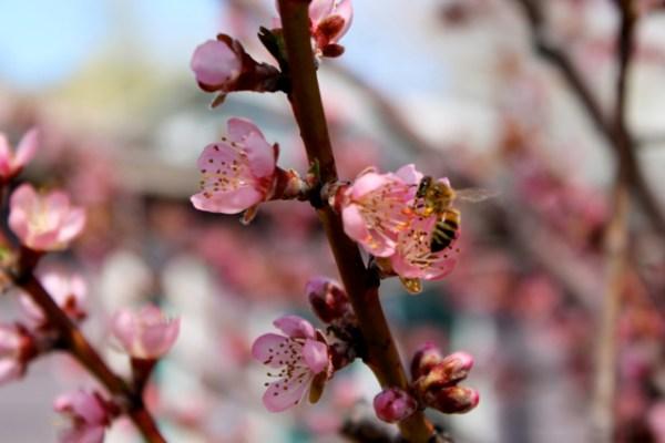 spring seeing3
