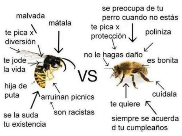 Avispas contra abejas