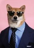 Menswear Dog wearing a suit