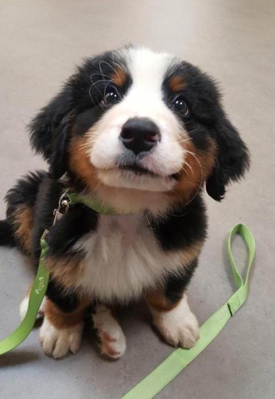 Recopilación de perretes bonitos I