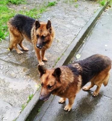 Una hombre con cáncer terminal pide ayuda para encontrar un nuevo hogar a sus perros