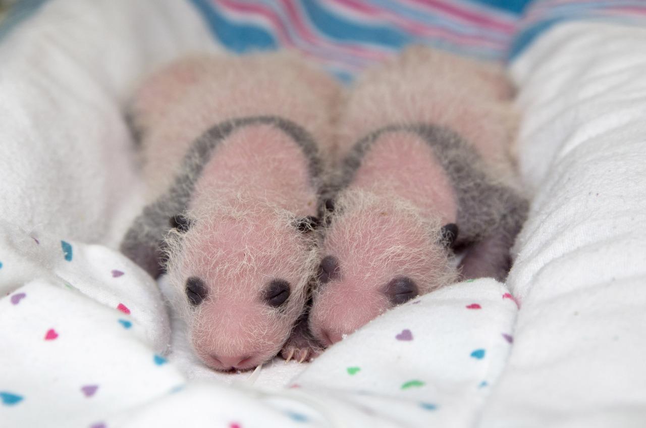 fotos de animales bebés