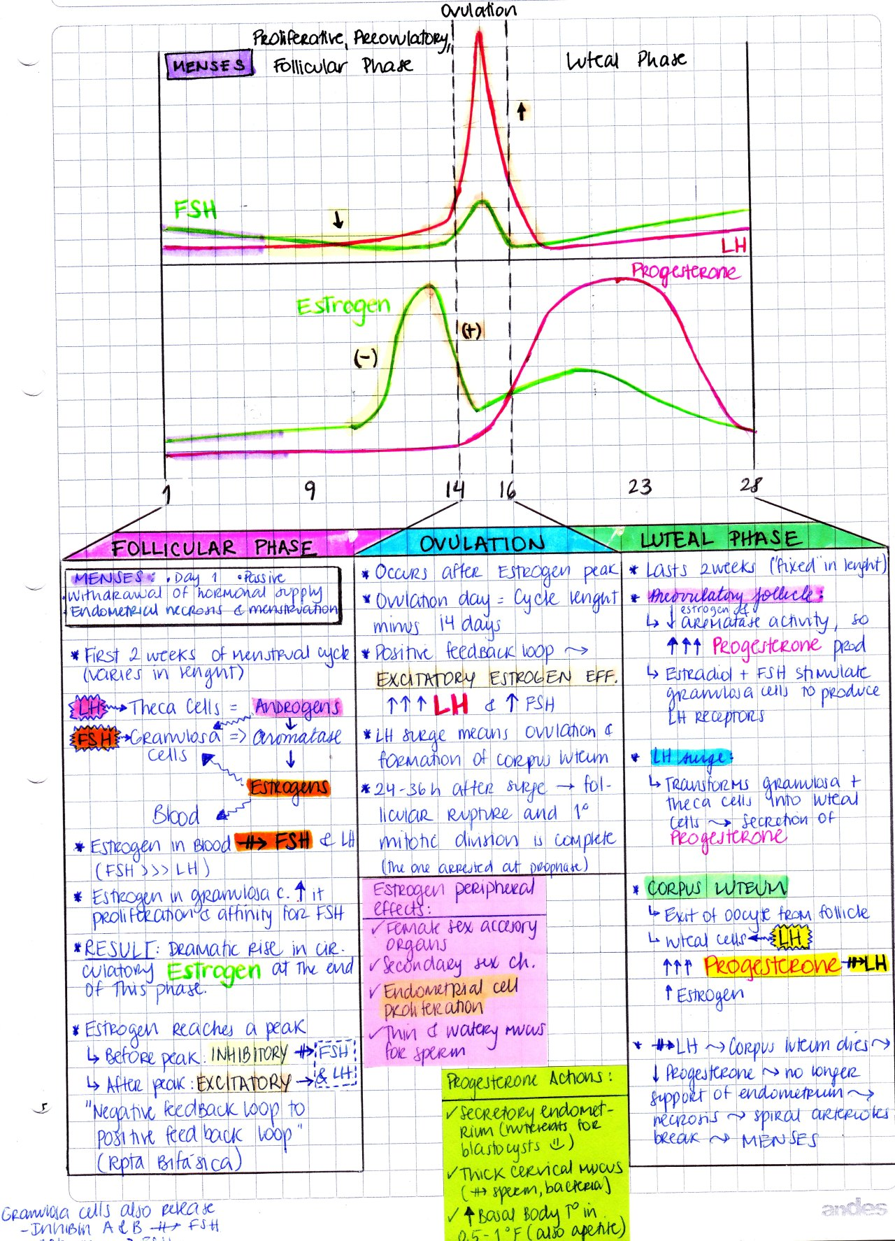 My Notes For Usmle