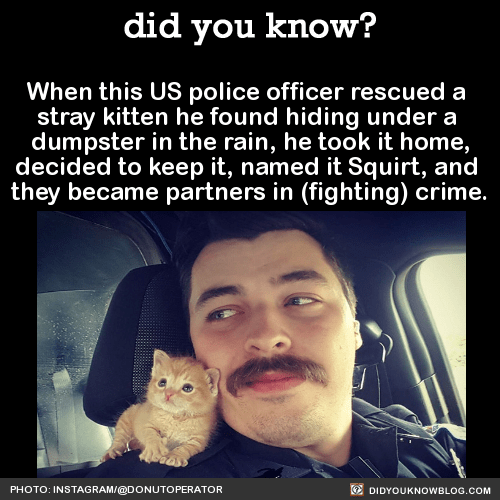 When this US police officer rescued a stray kitten he found hiding under a dumpster in the rain, he took it home, decided to keep it, named it Squirt, and they became partners in (fighting) crime. Source