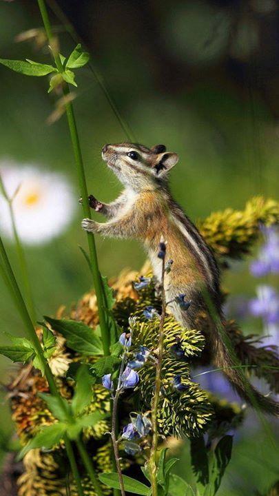 amandaricks.com/precious-nature-photo/